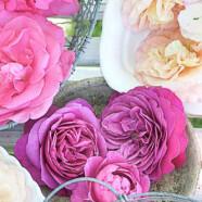 Rosen zum Frühstück: Ein Rosentraum fürs Butterbrot