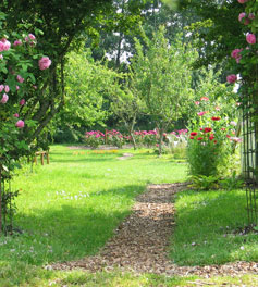 Pfad durch den Rosengarten