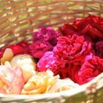 rosenfeines-ernte-galerie-07