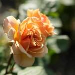 rosenfeines-garten-galerie-01
