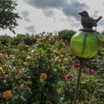rosenfeines-garten-galerie-02