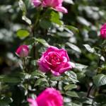 rosenfeines-garten-galerie-03