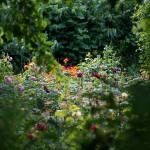 rosenfeines-garten-galerie-04