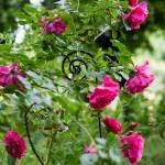 rosenfeines-garten-galerie-07