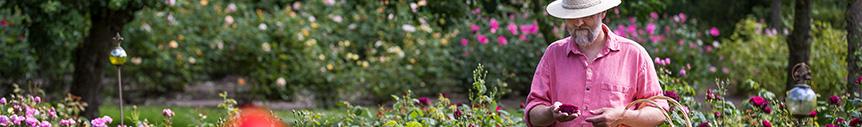 Rosenleidenschaft